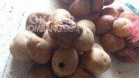 KPM Jombang terima kentang busuk