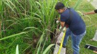 Polisi saat melakukan identifikasi penemuan mayat di ladang tebu Dusun Banjarsari Desa Rejoslamet Kecamatan Mojowarno Kabupaten Jombang, Sabtu (30/1/2021). KabarJombang.com/Sarep/