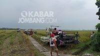 Panen raya di Kabupaten Jombang/kabarJombang.com/Daniel Eko