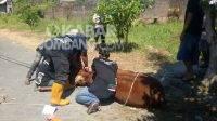 Penyembelihan hewan kurban di area kantor Kelompok Faktual Media (KFM), Perumahan Jombang Citra Raya, Selasa (20/7/2021). KabarJombang.com/Diana Kusuma/