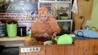 Berburu Kuliner Kupang Kraton di Jombang, Makanan Sehat Pedas Manis