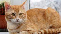 Kucing, Berita Jombang, Wisata Jombang, Hobi