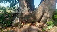 Petilasan mbah Rondo Kuning cikal bakal asal usul desa Ngudirejo, Kecamatan Diwek, Kabupaten Jombang. KabarJombang.com/M Faiz H/