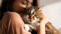 Kucing, Hobi, Berita Jombang, Jombang, Kesehatan
