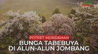 Potret keindahan bunga Tabebuya di alun-alun Kabupaten Jombang, Rabu (8/9/2021).