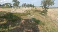 Lokasi tanah milik Desa Sentul, Kecamatan Tembelang, Kabupaten Jombang diduga bakal beralih ke perorangan. KabarJombang.com/Diana Kusuma Negara/